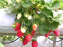 220px-Strawberries