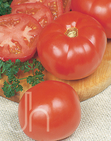 park s whopper tomato pictures