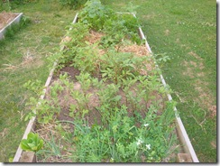 raised bed 1
