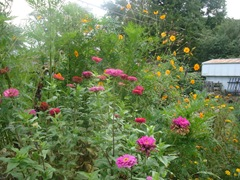 bushy garden