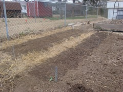 carrot bed and lettuce bed