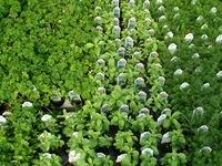 charley's herbs