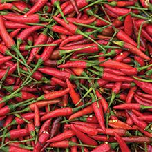 pepper Chile de Arbol