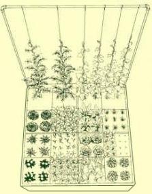 Square Foot Gardening System Urbangardencasual