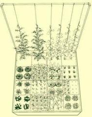 square-foot-gardening-system-urbangardencasual