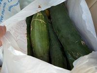 vegetables_31